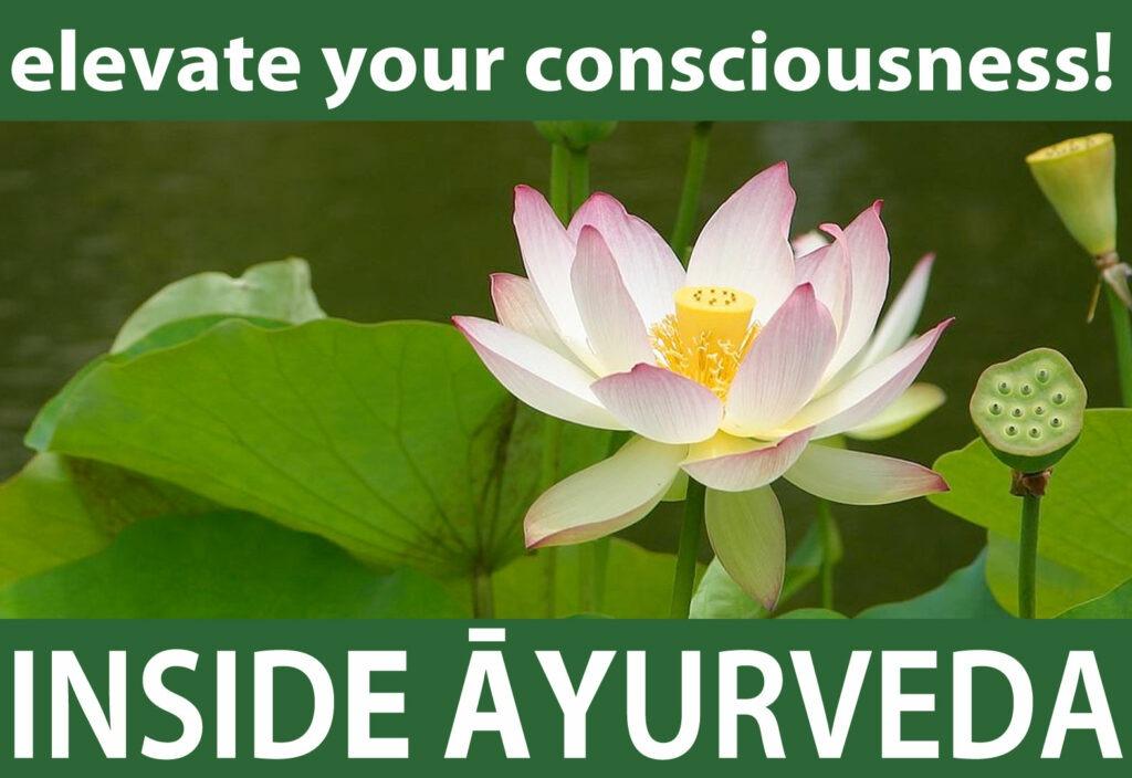 elevateyourconsciousness