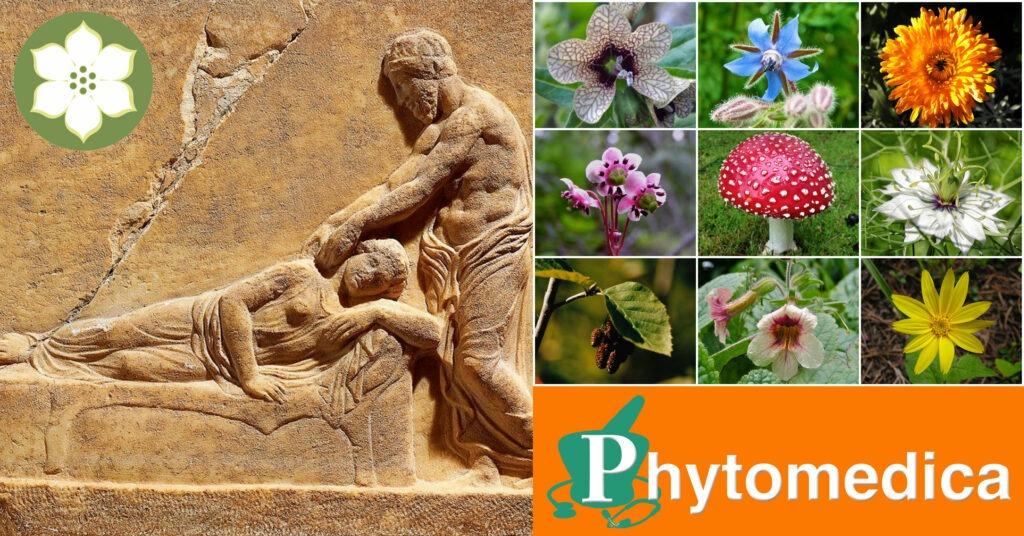 Should Kratom be banned? | Dogwood School of Botanical Medicine