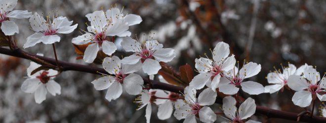 Full moon spring equinox herb gathering
